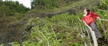 Die Haiku Stairs - ein kleines Wander-Wunder auf Hawaii