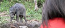 Kleiner Elefant in der Nähe von Chiang Mai